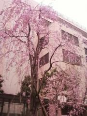 咲きました^^