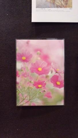 コスモスのポストカード