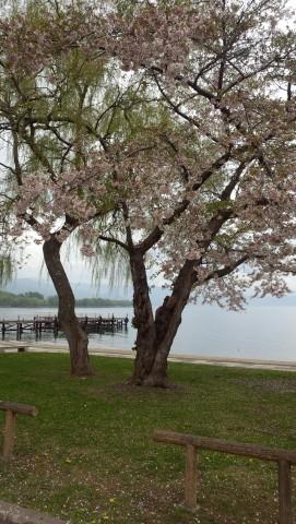 桜が咲いてました♪